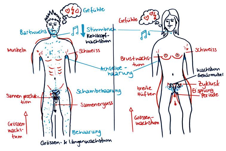 Implanty die Brust israil